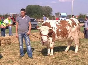 bogatic-goveda