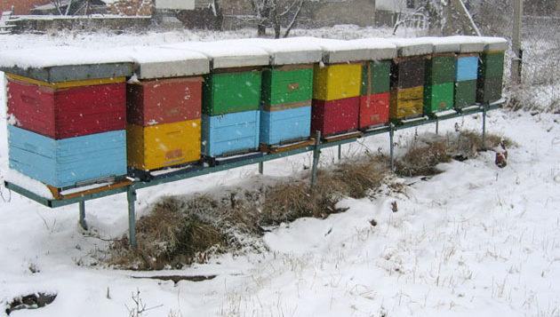 Obrazovanje pčelara